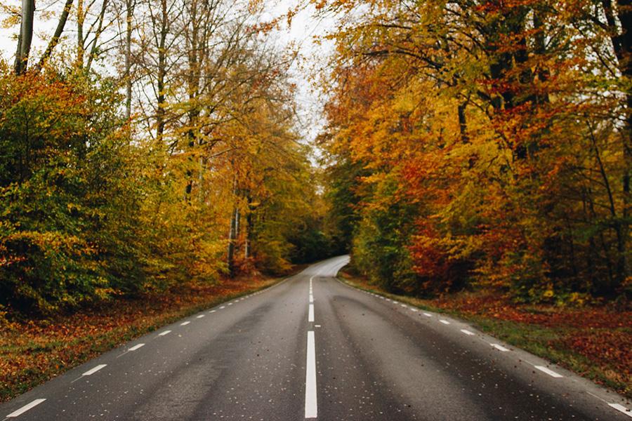 Den svenska hösten är vacker, men olycksbådande fuktig. Tre tips