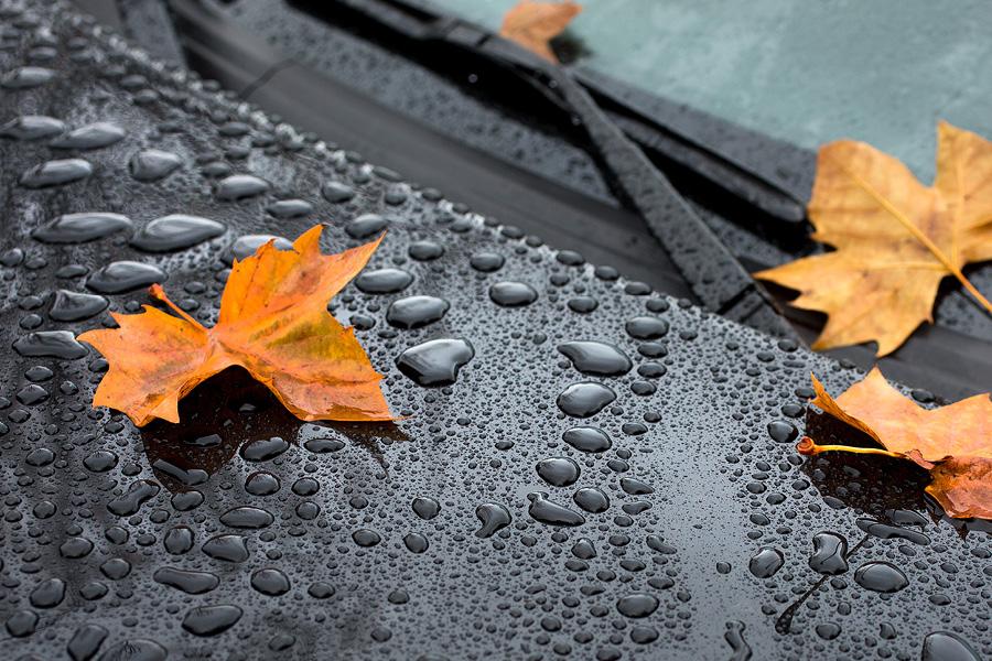När höstlöven lägger sig på bilen bildas en gegga som etsar sig fast på lacken och lämnar fula märken